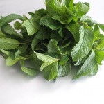 How To Dry Mint