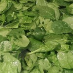 Crunchy Spinach Chips   Recipe